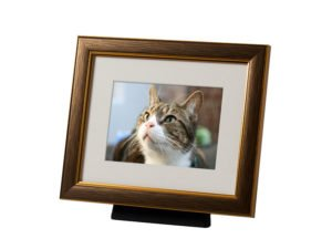 Beautiful discreet photo frame pet urn in Bronze. Also available in Silver, Black, Pewter and Champagne. For pet dog, horse, cat ashes. Can be personalized.