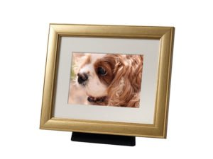 Beautiful discreet photo frame pet urn in Champagne. Also available in Silver, Black, Pewter and Bronze. For pet dog, horse, cat ashes. Can be personalized.